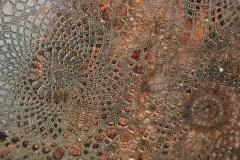 Detail vlinderschaal